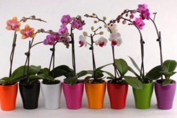 У вас есть одна орхидея. А хотите, чтобы их было 100 1
