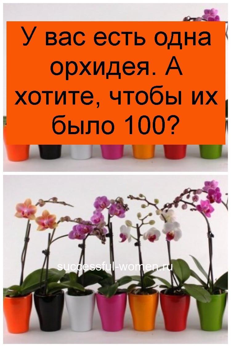 У вас есть одна орхидея. А хотите, чтобы их было 100 4