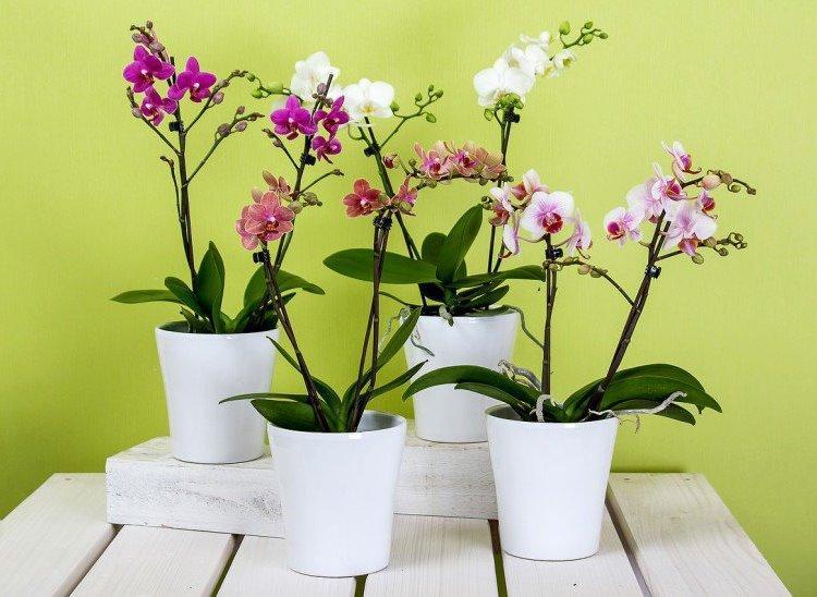 У вас есть одна орхидея. А хотите, чтобы их было 100 6