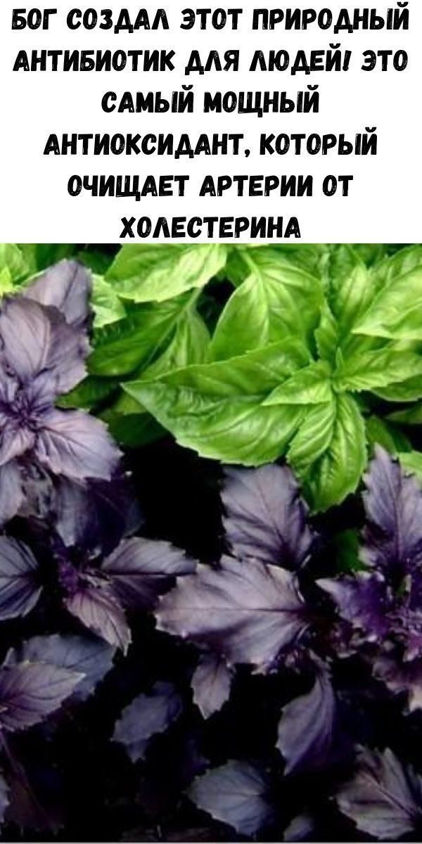 bog-sozdal-etot-prirodnyy-antibiotik-dlya-lyudey-eto-samyy-moschnyy-antioksidant-kotoryy-ochischaet-arterii-ot-holesterina-2-1900054