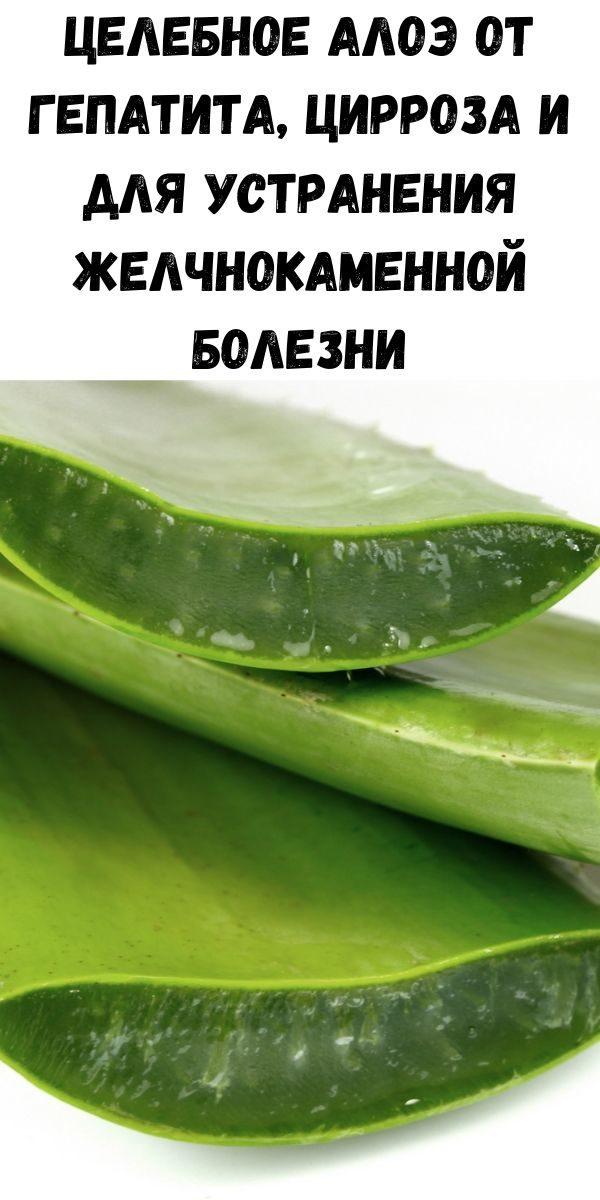 celebnoe-aloe-ot-gepatita-cirroza-i-dlya-ustraneniya-zhelchnokamennoy-bolezni-2-8948327