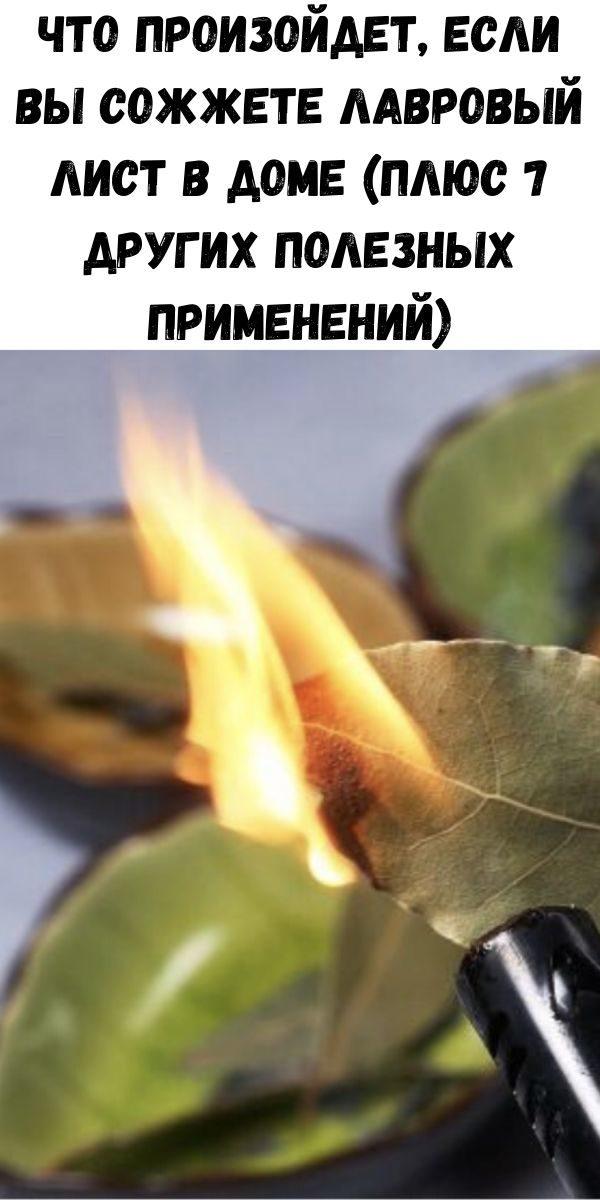 chto-proizoydet-esli-vy-sozhzhete-lavrovyy-list-v-dome-plyus-7-drugih-poleznyh-primeneniy-2-5782037