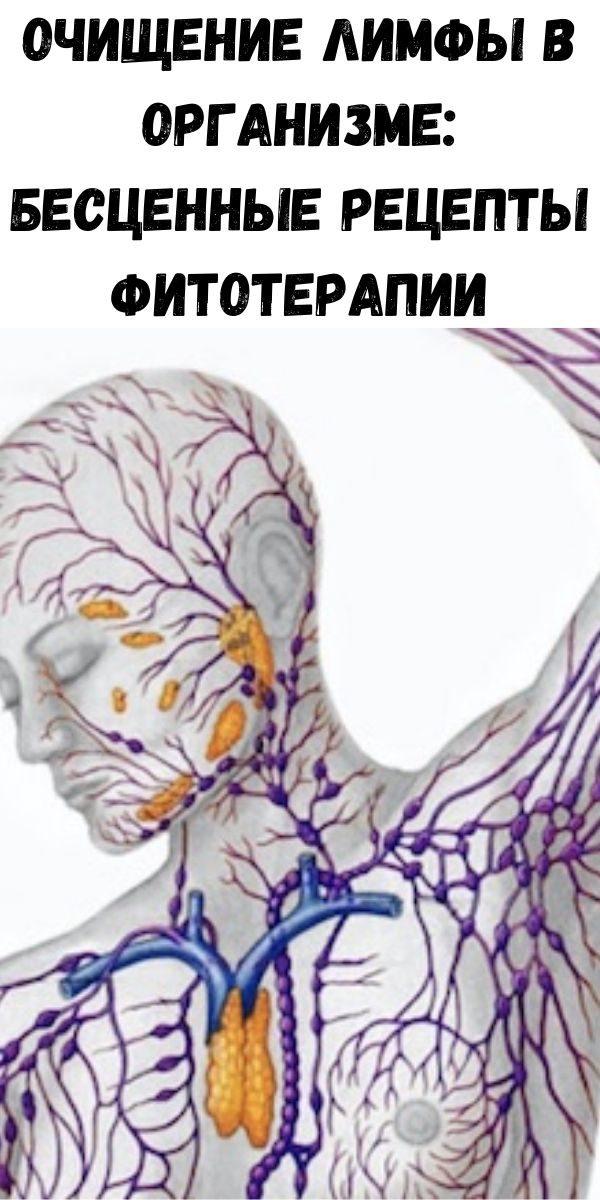 ochischenie-limfy-v-organizme-bescennye-recepty-fitoterapii-2-5471436