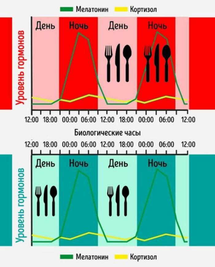 okno-pitaniya-fenomen-kotoryy-pomozhet-pohudet-lyubomu-cheloveku-3-9704707