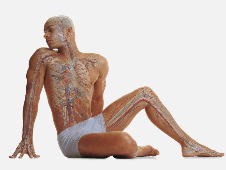 omolozhenie-endokrinnoy-sistemy-chto-vazhno-znat-1-9155711