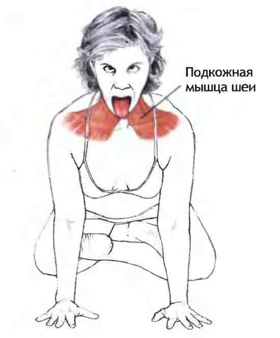podkozhnaya-myshca-shei-sekret-molodoy-i-zdorovoy-shei-8-6849489