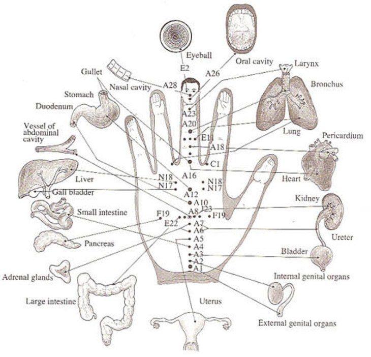 su-dzhok-terapiya-iscelit-sebya-bez-igl-i-tabletok-2-1798551