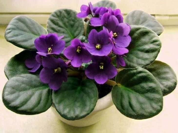 top-5-cvetov-i-rasteniy-kotorye-privlekayut-v-dom-lyubov-schast-e-i-udachu-3-5288369
