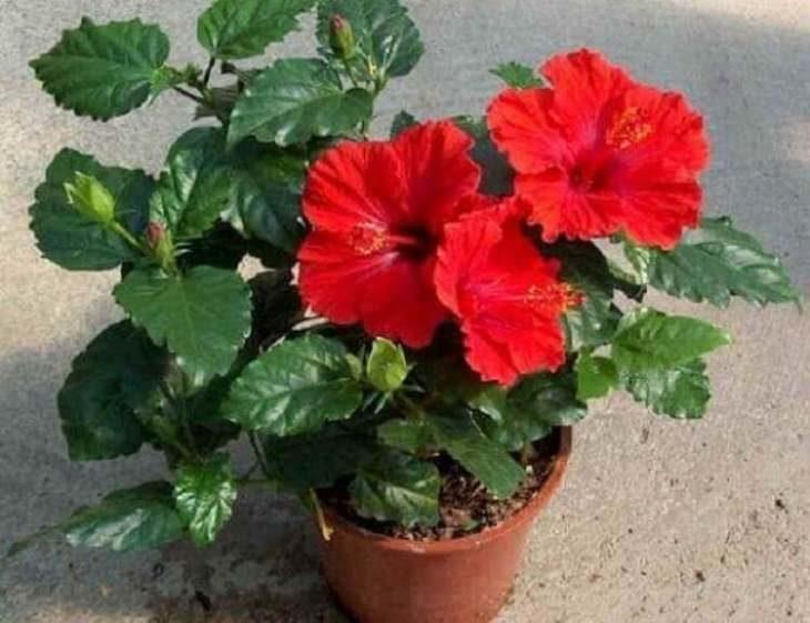 top-5-cvetov-i-rasteniy-kotorye-privlekayut-v-dom-lyubov-schast-e-i-udachu-4-5388435