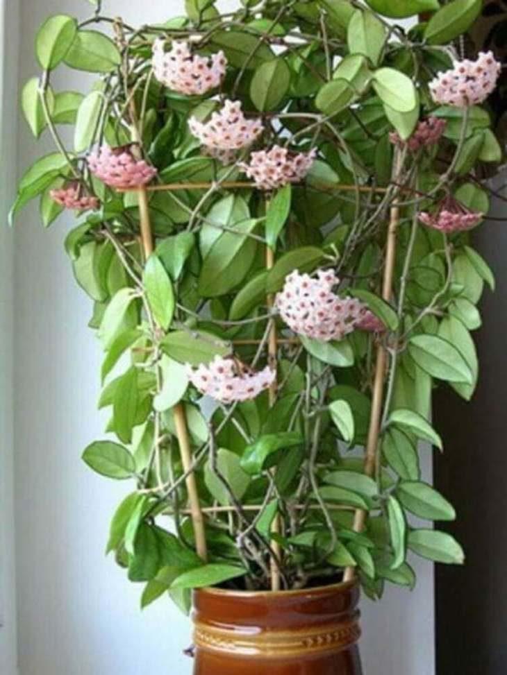 top-5-cvetov-i-rasteniy-kotorye-privlekayut-v-dom-lyubov-schast-e-i-udachu-5-6497028