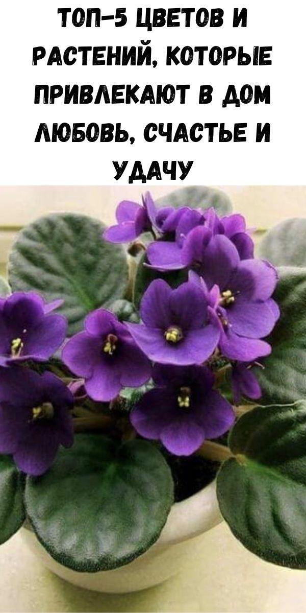 top-5-cvetov-i-rasteniy-kotorye-privlekayut-v-dom-lyubov-schast-e-i-udachu-7-9890520